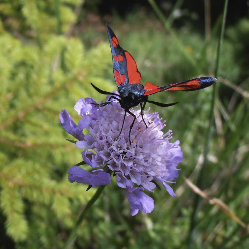 Dierenkaarten - Fleurige vlinder
