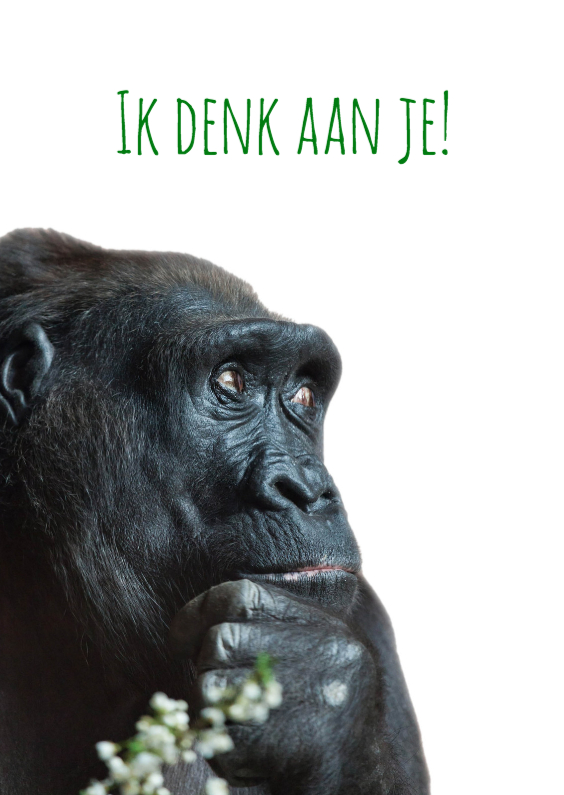 Dierenkaarten - gorilla in gedachten-isf
