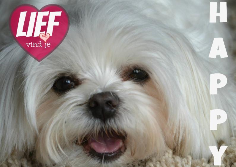 Dierenkaarten - Hondje vindt jou lief