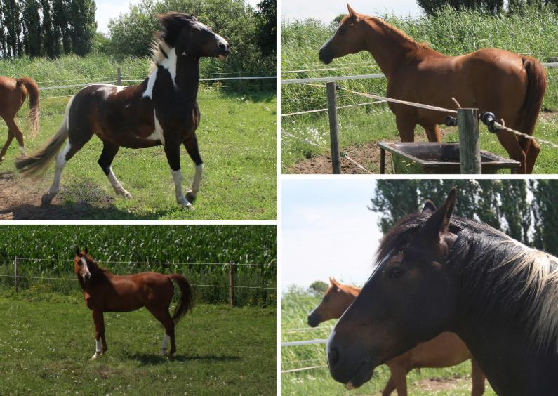 Dierenkaarten - Horses