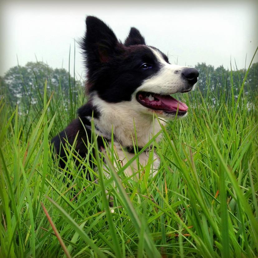 Dierenkaarten - Kaart Hondje in het gras