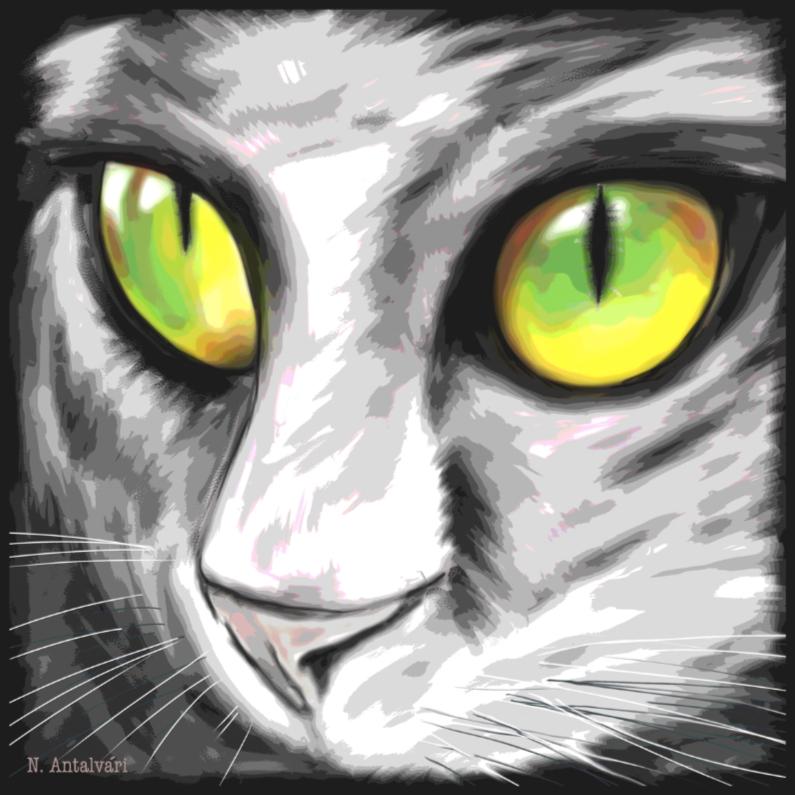 Dierenkaarten - KatteOgen