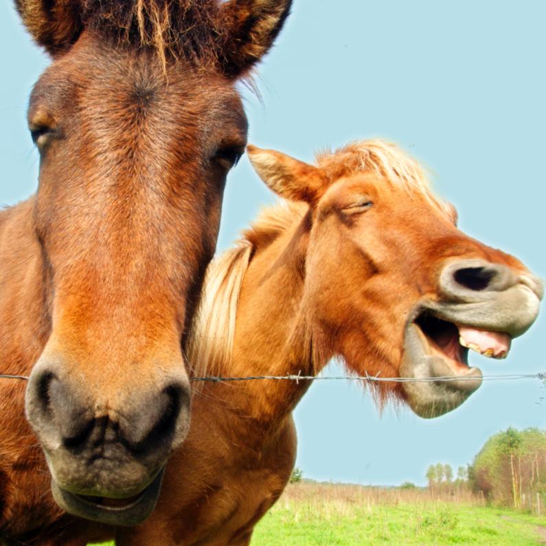 Dierenkaarten - Lachende paarden