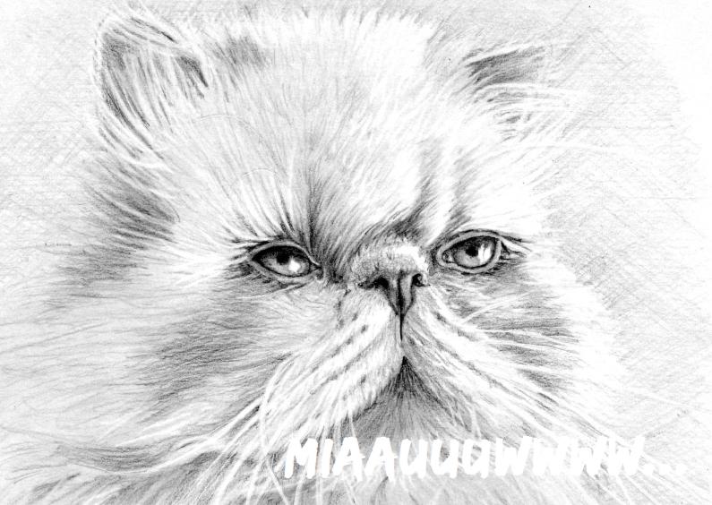 Dierenkaarten - Langharige kat