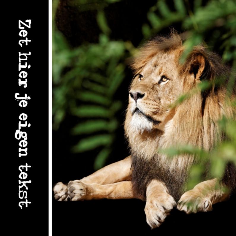 Dierenkaarten - Leeuwengroetjes - OTTI