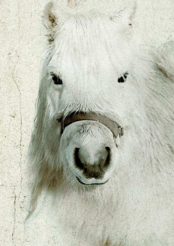Dierenkaarten - Lief paardje