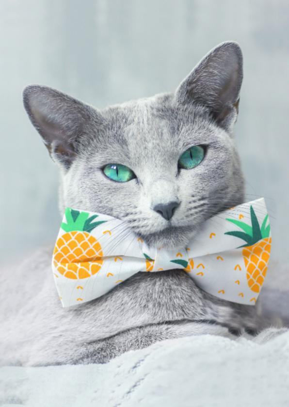 Dierenkaarten - Lieve kaart van grijze kat en ananas