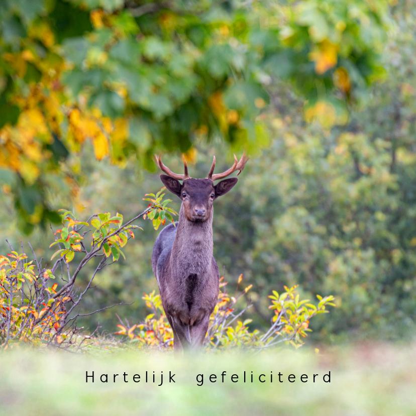 Dierenkaarten - Mannetjes hert in de herfst