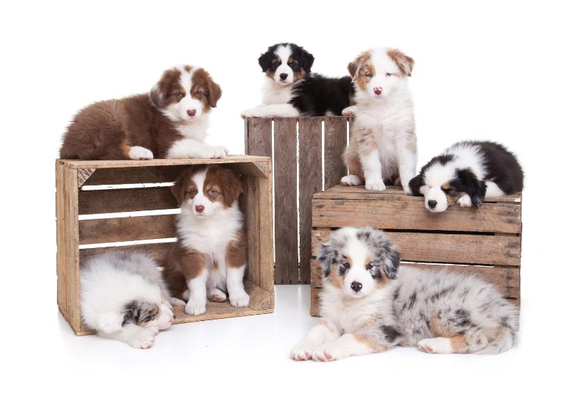 Dierenkaarten - Zomaar een kaartje - Puppies