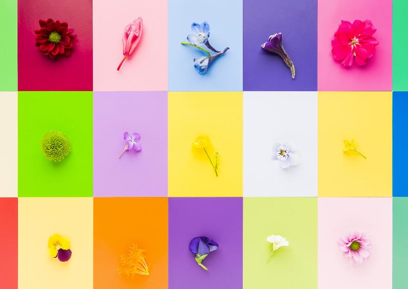 Felicitatiekaarten - Bloemen in veel vrolijke kleuren
