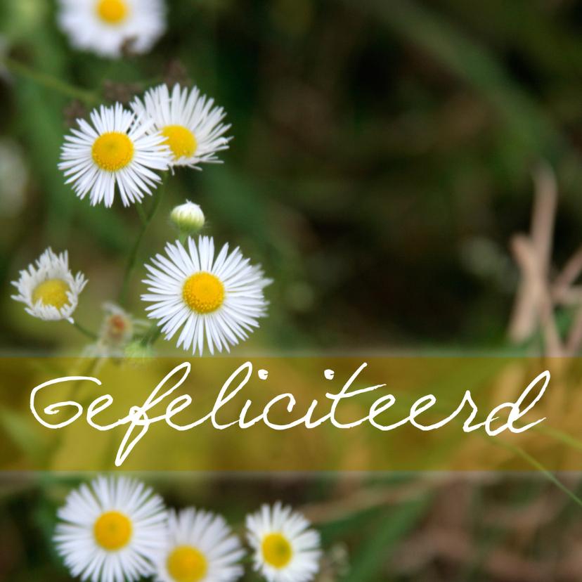 Felicitatiekaarten - Bloemetjes in bos