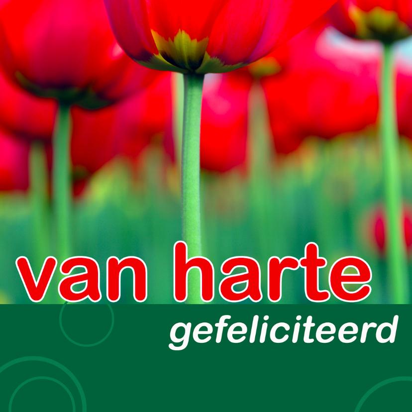 Felicitatiekaarten - felicitatiekaart met tulpen