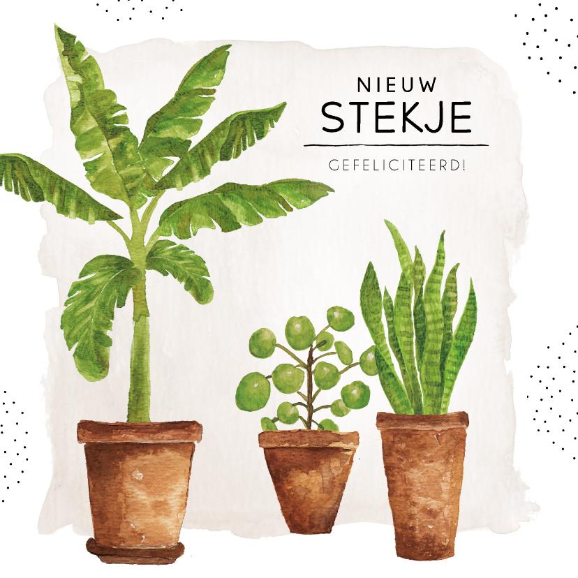 Felicitatiekaarten - Felicitatiekaart nieuwe woning met groene kamerplanten