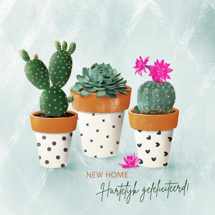 Felicitatiekaarten - Felicitatiekaart vetplanten in zwart-wit terracotta potjes