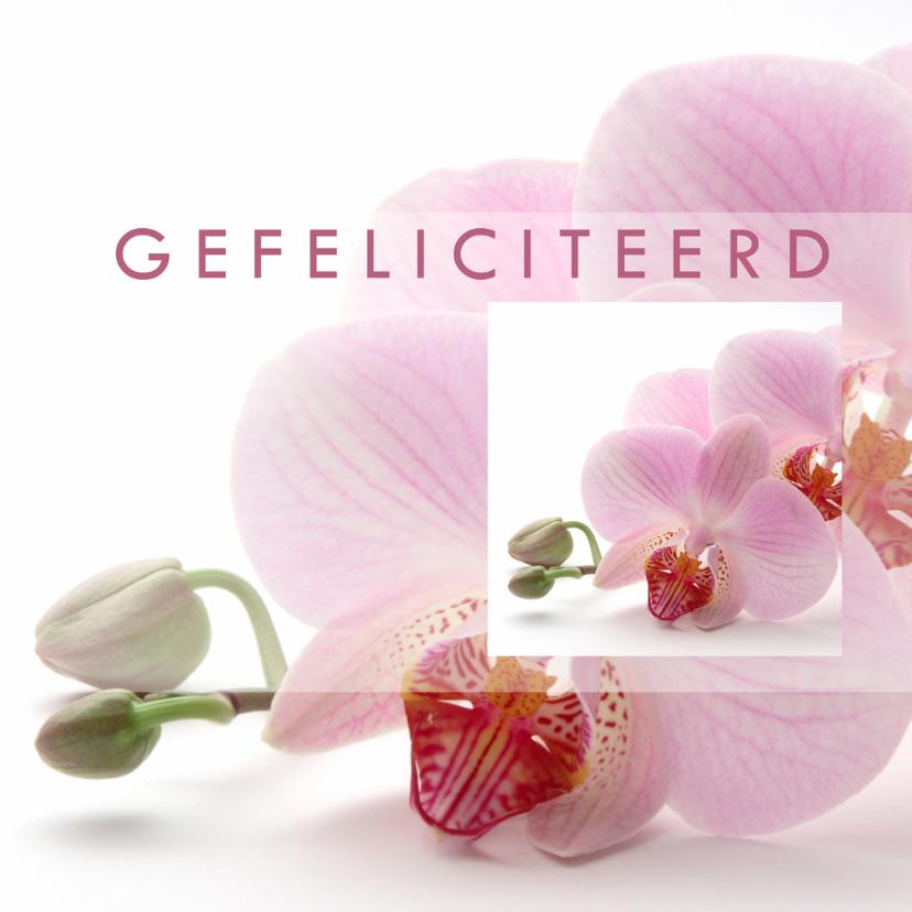 Felicitatiekaarten - Gefeliciteerd Orchidee