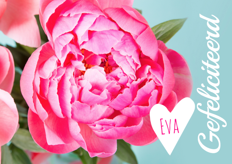 Felicitatiekaarten - Gefeliciteerd Roze pioenrozen