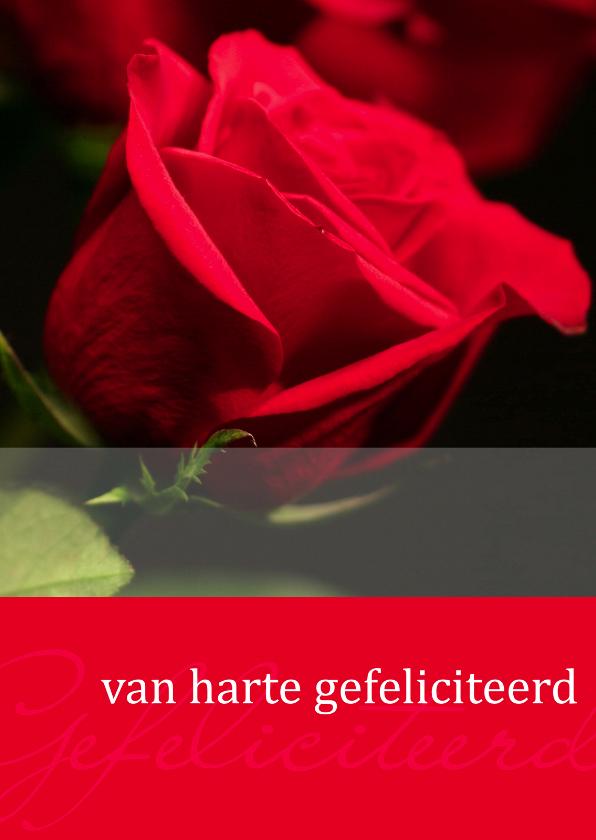 Felicitatiekaarten - Moments kaart Gefeliciteerd rode roos