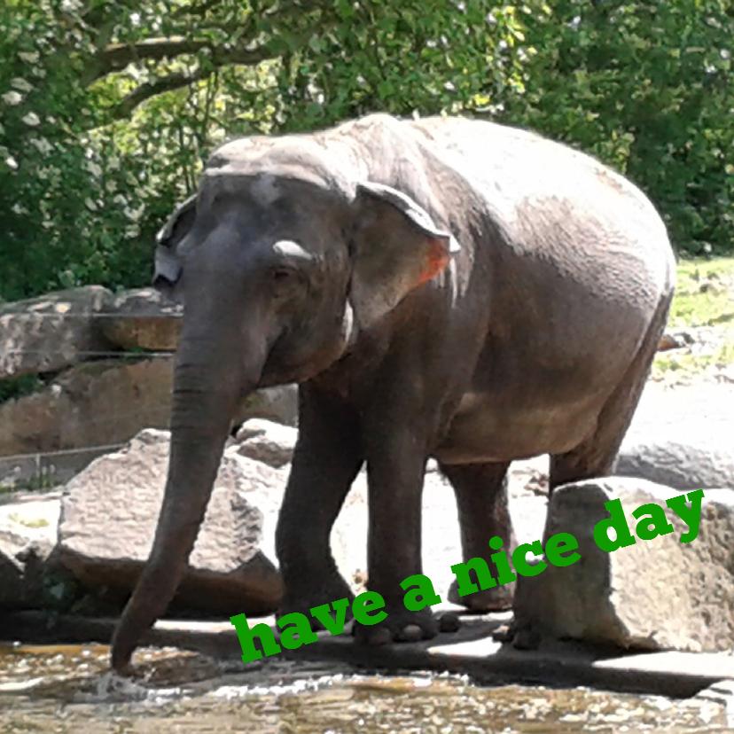 Felicitatiekaarten - olifantenkaart. have a nice day