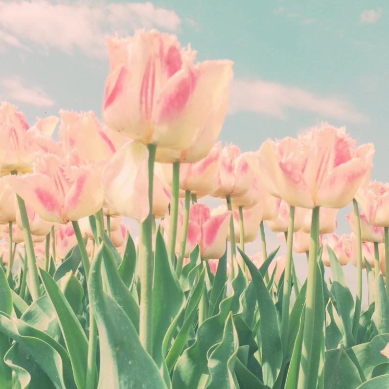 Felicitatiekaarten - roze tulpen in't veld