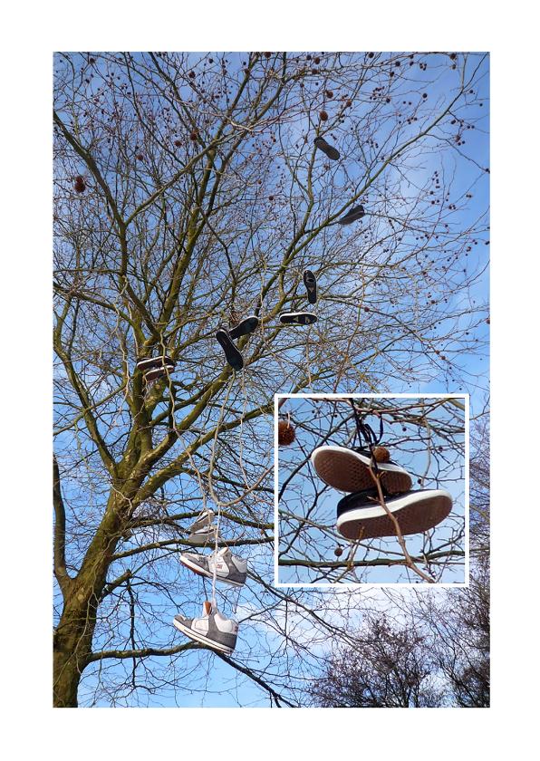 Felicitatiekaarten - Schoenen in de Wilgen - avondvierdaagse