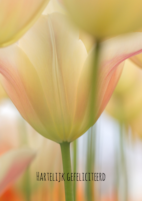Felicitatiekaarten - Stijlvolle tulpen