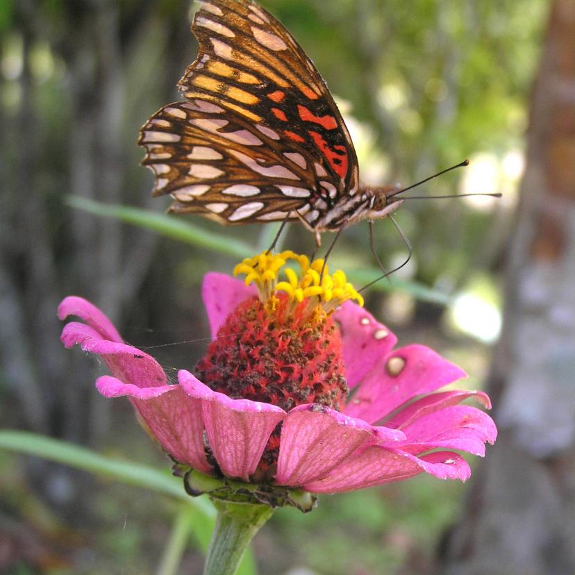 Felicitatiekaarten - Vlinder op roze bloem