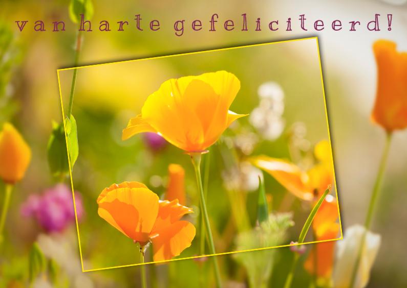 Felicitatiekaarten - zonnige veldbloemen