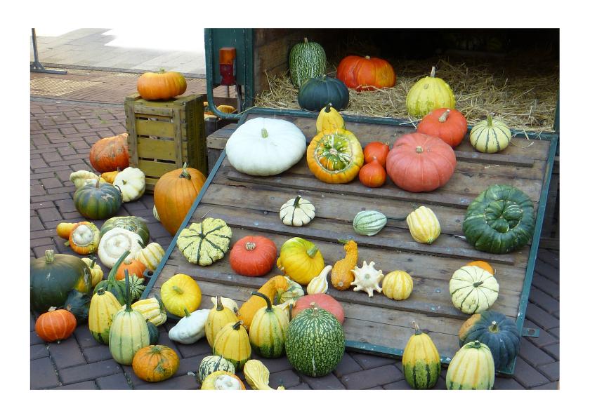 Halloween kaarten - Ansicht Pompoenen Kalebassen
