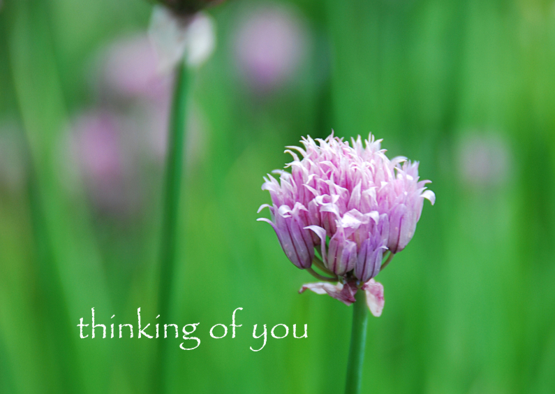 12051 Sterkte kaart Thinking of you 1