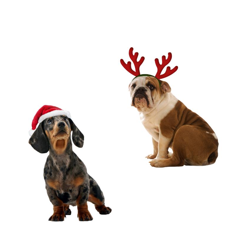 3 hondjes kerstmuts-isf 2