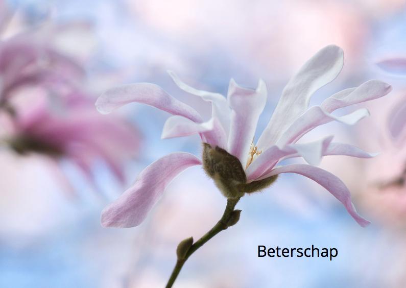 Beter met Magnolia bloemen 1