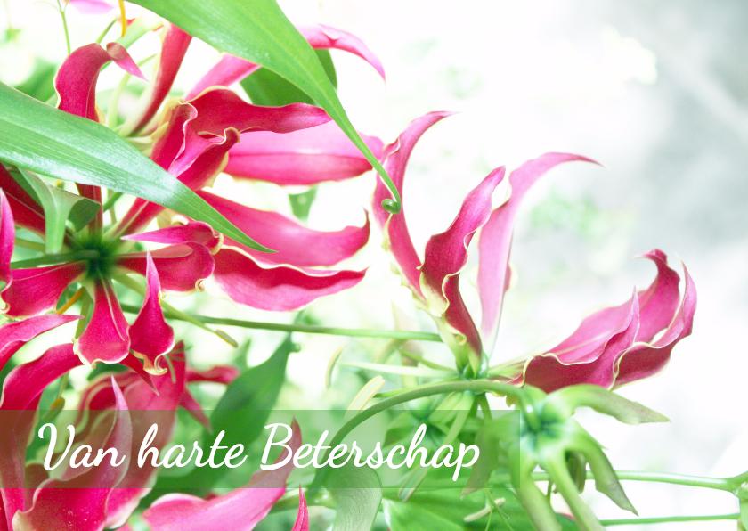 Beterschap dromerig roze&groen 1