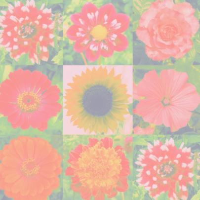 Beterschapkaart geluksbloemen IW 2