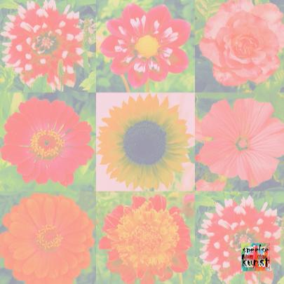 Beterschapkaart geluksbloemen IW 3
