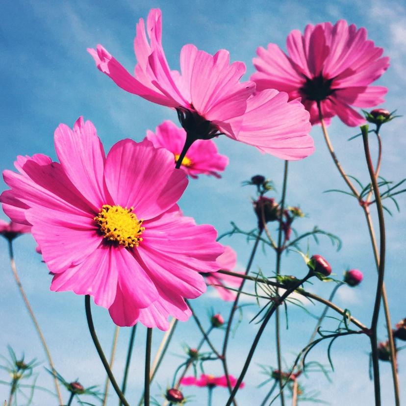 Beterschapskaart bloemen - LB1 1
