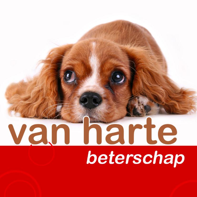 beterschapskaart met hondje 1