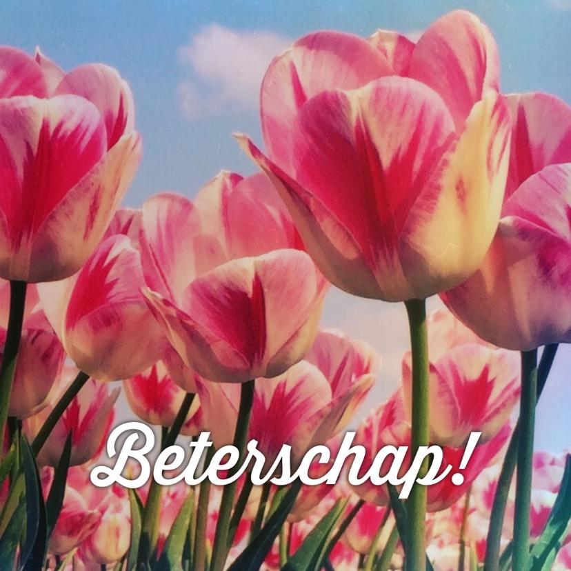 Beterschapskaart tulpen III - LB 1