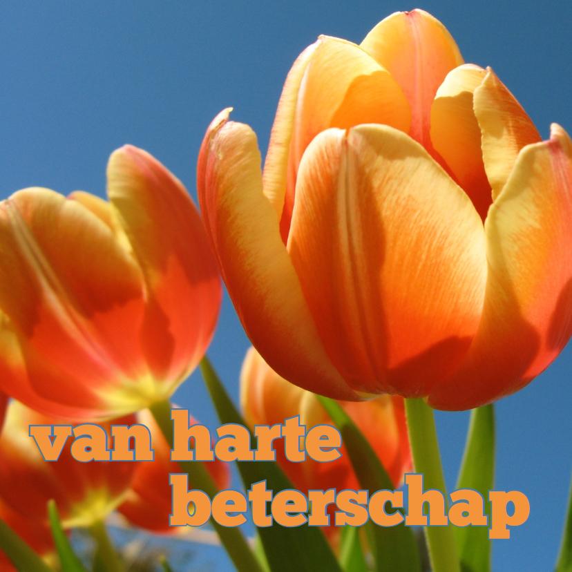 beterschapskaart tulpen VII -LB 1