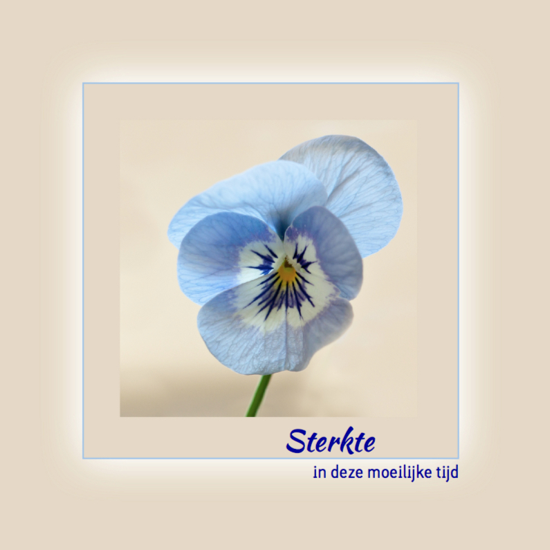 Blauw viooltje 1