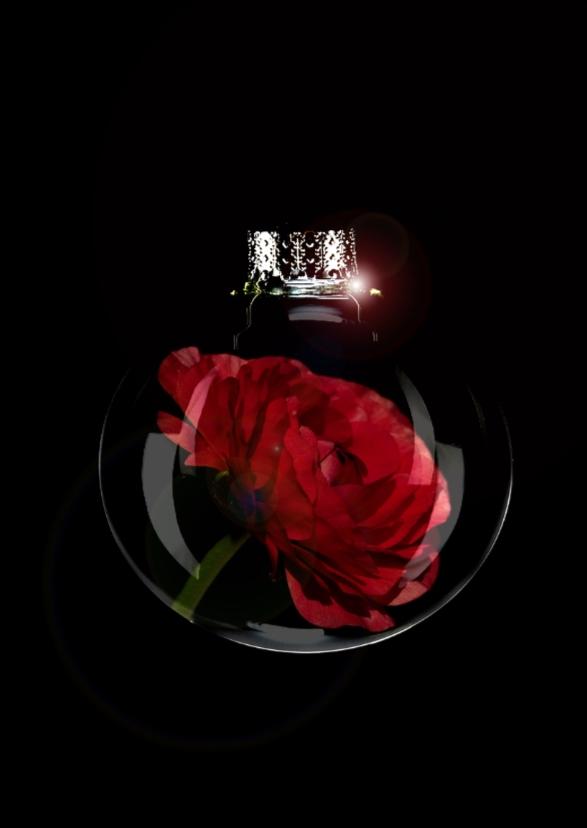 bloem in bal rood 1