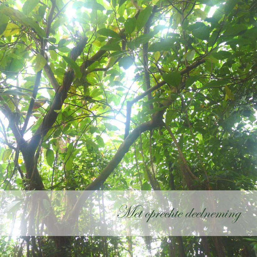 Condoleancekaart bomen2