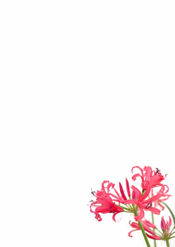 Felicitatie roze&wit 3