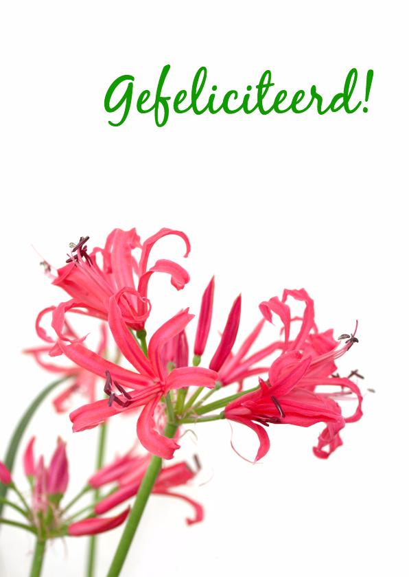 Felicitatie roze&wit 1