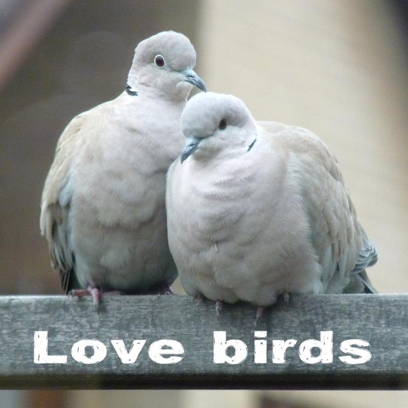 Felicitatiekaart lovebirds2 1