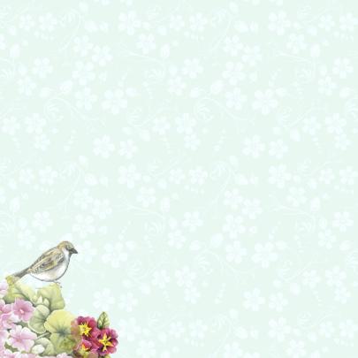 Gefeliciteerd vogelhuisje vogels 2