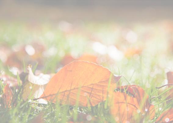 herfstblad in het gras 3