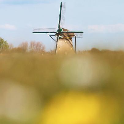 Hollands landschap met molen 2