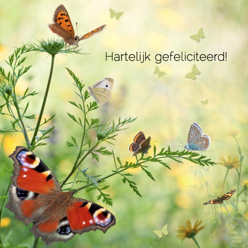 Jarig met vlinders 1