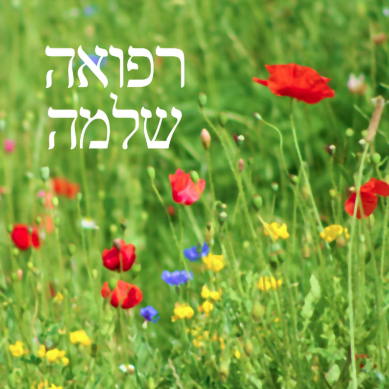 joods hebreeuws beterschap veldbloemen 1