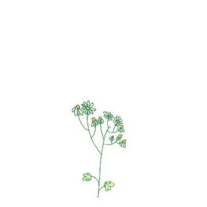 Kamille plant beterschapskaart 2